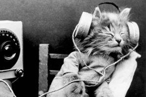 prieskum-hudby