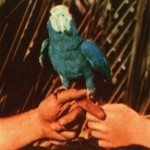 ANDREW BIRD VŽDY NIEČO VYMYSLÍ – TERAZ …