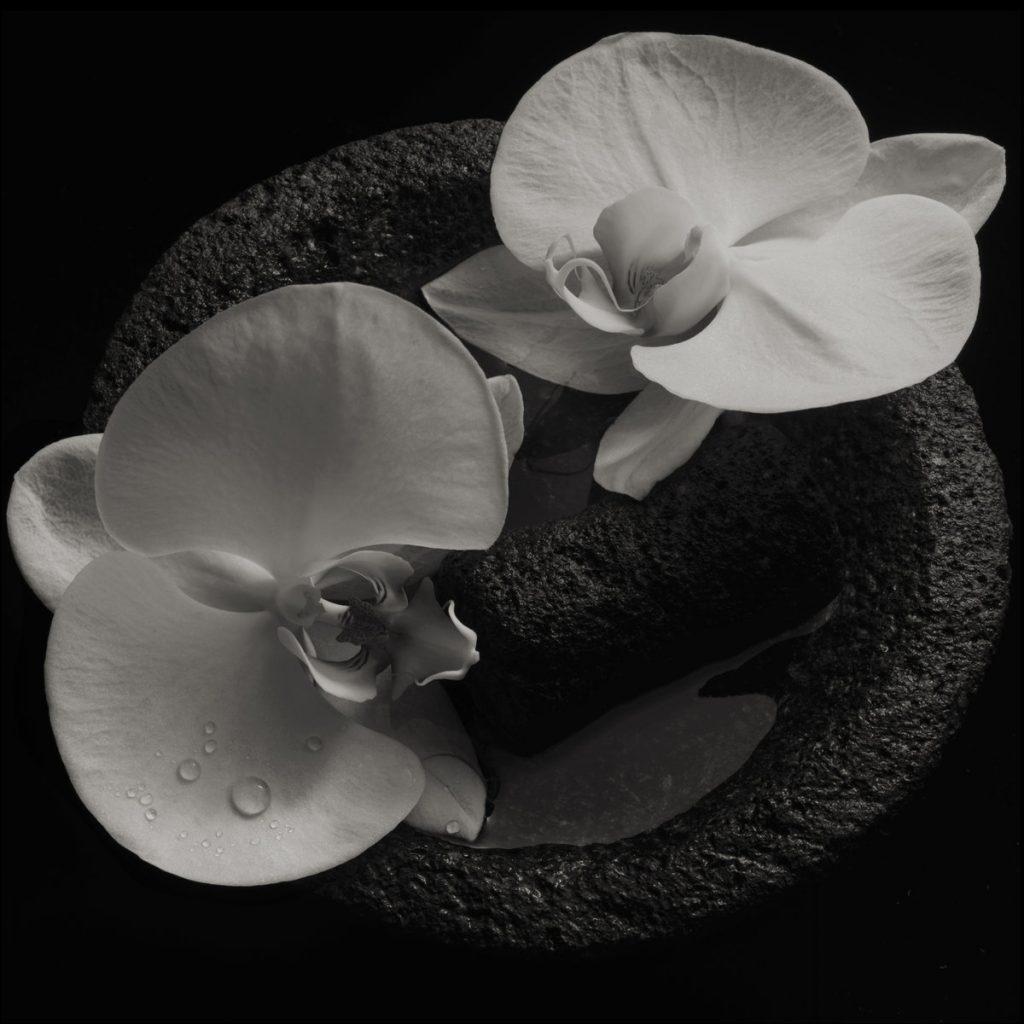 Mike Patton, Jean-Claude Vannier - Corpse Flower